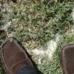 neige-de-printemps-8526