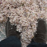 neige-de-printemps-8589