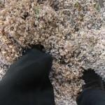 neige-de-printemps-8632