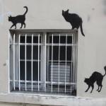 nos-chats-sont-noirs-comme-le-fameux-drapeau-de-nos-aieuls-7143