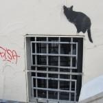 nos-chats-sont-noirs-comme-le-fameux-drapeau-de-nos-aieuls-7145