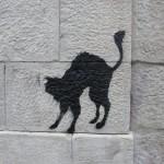 nos-chats-sont-noirs-comme-le-fameux-drapeau-de-nos-aieuls7148