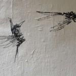 oiseaux-9442