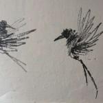 oiseaux-9443