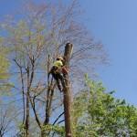 on-acheve-bien-en-arbre-0205
