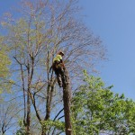on-acheve-bien-en-arbre-0206