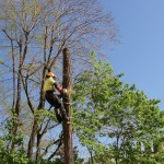 on-acheve-bien-en-arbre-0207