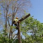 on-acheve-bien-en-arbre-0208