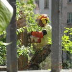 on-acheve-bien-en-arbre-0214