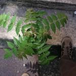 plante urbaine qui protège mon pied du soleil