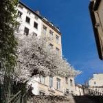 printemps-2011-6619