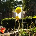 printemps-2011-81311