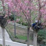printemps-2012-5957