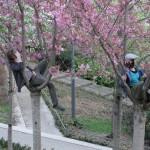 printemps-2012-5958