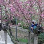 printemps-2012-5959