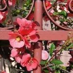 printemps-2012-5972