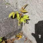 printemps-2012-5985