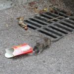 rat-de-ville-5651