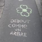 zone-a-fleurs-9982